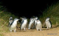 2-Penguin 4
