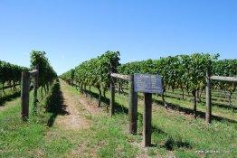14-Te Awa winery Hawke's Bay 2-7-2011 4-18-40 PM