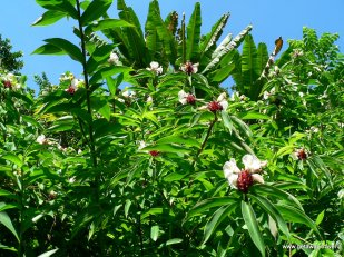 24-Maui road to hana Keanae arboretum 5