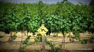 Wino Crossing sign at Va Piano