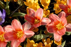 the-netherlands-keukenhof-flowers-1-hires